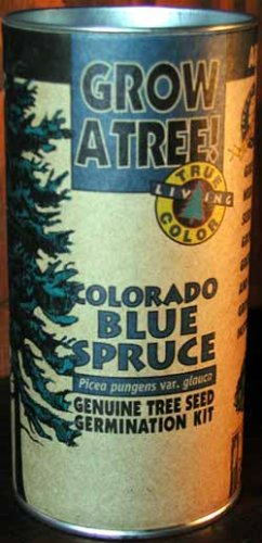 Colorado Blue Spruce Growing ()