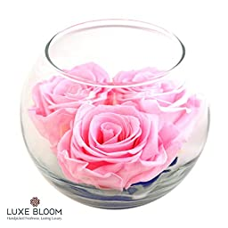 Luxe Bloom 3 Fresh Cut Preserved Ballet Pink Roses and Greens in 4\