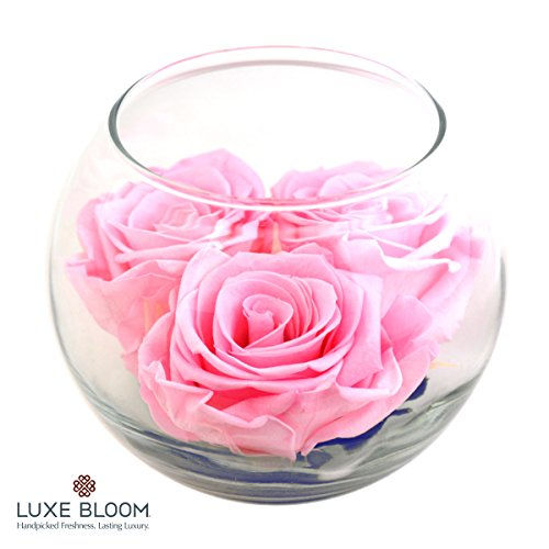 """UPC 737488265477, Luxe Bloom 3 Fresh Cut Preserved Ballet Pink Roses and Greens in 4"""" Glass Bubble Lasts 60 Days"""