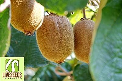 Liveseeds -Kiwi Seeds, New Zealand Kiwi Fruit Seeds, Fresh Live - 20 Seeds