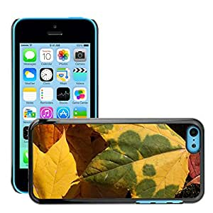 Hot Style Cell Phone PC Hard Case Cover // M00151559 Autumn Fall Foliage Golden Autumn // Apple iPhone 5C