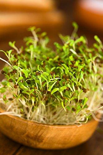 Brotes de alfalfa - semilla: Amazon.es: Jardín