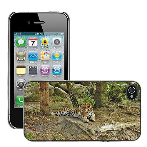 Bild Hart Handy Schwarz Schutz Case Cover Schale Etui // M00134175 Tiger Tiergehege Tired // Apple iPhone 4 4S 4G