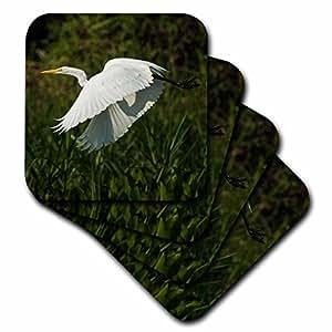 Danita Delimont - Birds - Great Egret, Ardea alba, Northern Pantanal, Mato Grosso, Brazil - set of 4 Ceramic Tile Coasters (cst_228671_3)
