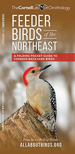 Feeder Birds of the Northeast: A Folding Pocket Guide to Common Backyard Birds (All About Birds Pocket Guide Series) (Back Feeder)