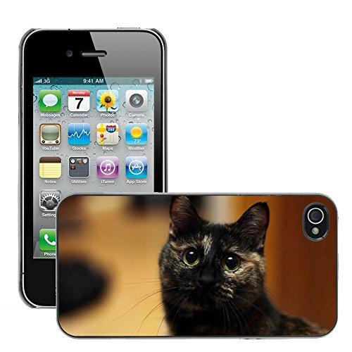 8e47035cc97289 Bild Hart Handy Schwarz Schutz Case Cover Schale Etui // M00134579 Cat  Bobtail // Apple iPhone ...