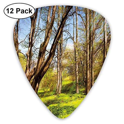 Guitar Picks - Abstract Art Colorful Designs,Spring Forest Flower Field And Trees Dreamy Eco In Sunny Open Sky Landscape,Unique Guitar Gift,For Bass Electric & Acoustic Guitars-12 Pack