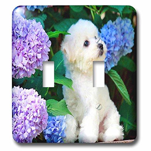 3dRose LLC lsp_80886_2 Adorable Bichon Frise Puppy Among ...
