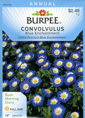 (Burpee Flower Convolvulus Blue Enchantment 100 Seeds per Packet)