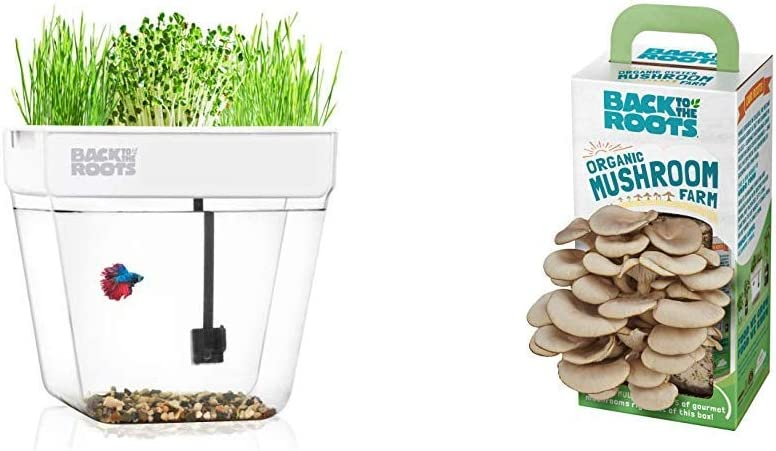 Back to the Roots Water Garden Betta Fish Tank + Organic Mushroom Growing Kit