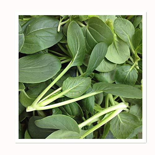 300 Chinese Little Greens Pak-choi Green Organic Vegetable Seeds ~Chris's garden