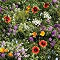 Premium Wildflower Seed Mix, No Filler, 1/2 Pound