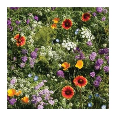Todd's Seeds - Beneficial Insectary Mix Seed - 1 oz Seed Packet : Vegetable Plants : Garden & Outdoor