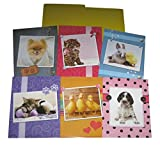 School Folders with Pockets - Puppy Dog Kitten Cat Chick Duck Bunny Rabbit Baby Animals - Total of 8