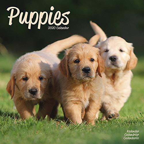 Puppies Calendar - Cute Animals Calendar - Dog Breed Calendars - Calendars 2017 - Calendars 2019 - 2020 Wall Calendars - Puppies 16 Month Wall Calendar by Avonside (Multilingual Edition)