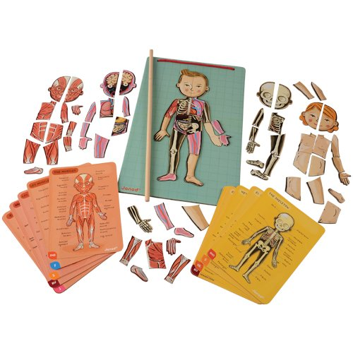(Magnetic Body Puzzle For Kid's to Learn the Human Anatomy)