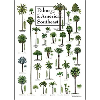 Palms of the American Southeast -- 19
