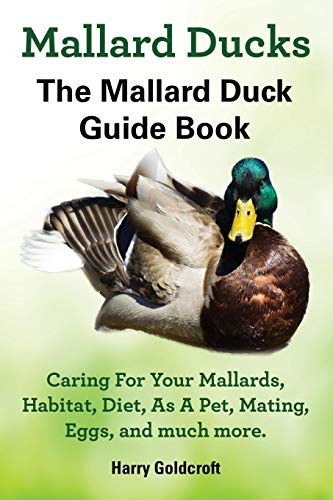 (Mallard Ducks)