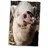 3D Rose Pet Pot Bellied Pig - Farm Animal - New Mexico - Us32 Jmr0497 - Julien McRoberts Hand/Sports Towel, 15 x 22