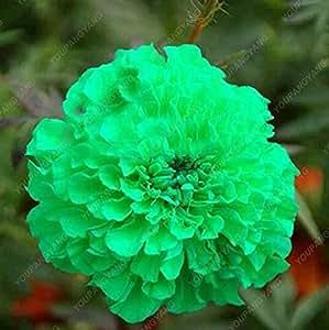 100pcs / bolsa de la cubierta de tierra del crisantemo Semillas fácil de cultivar semillas de flores de jardín de Bonsai Plantas multicolora