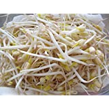 Mung Bean Seeds for Sprouting - Organic (1lb)