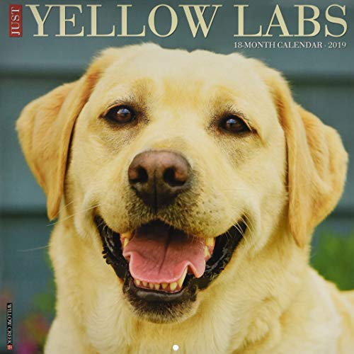 - Just Yellow Labs 2019 Wall Calendar (Dog Breed Calendar)