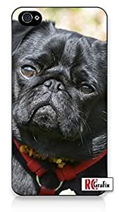 Adorable Black Pug Dog Direct Print (not a sticker) Iphone 5, 5s Quality TPU SOFT RUBBER Snap On Case for Iphone 5 - AT&T Sprint Verizon - White Case