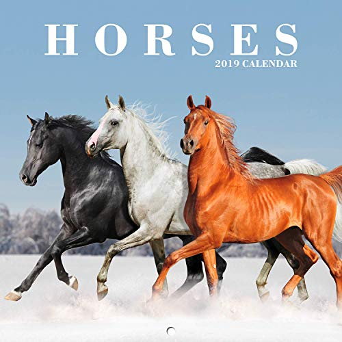 2019 Wall Calendar with Thick Paper, January 2019 - December 2019, 12