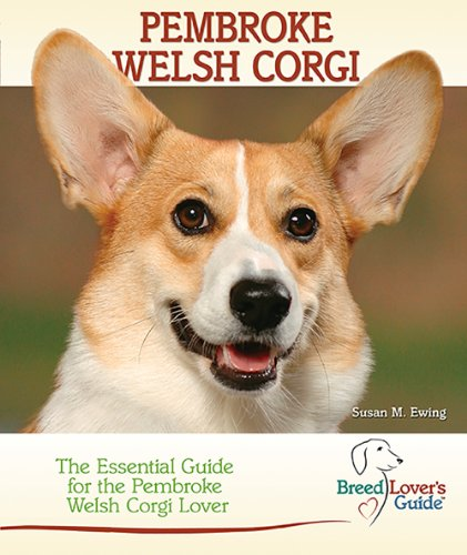 Meet the breed: Pembroke Welsh Corgi