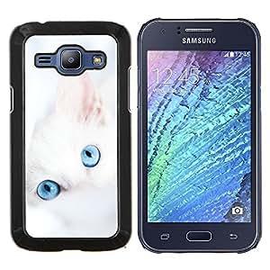 """Be-Star Único Patrón Plástico Duro Fundas Cover Cubre Hard Case Cover Para Samsung Galaxy J1 / J100 ( Lindo gatito blanco invierno Clean Baby Blue"""" )"""