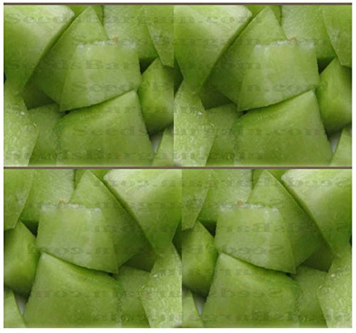 4 Packs x 50 HONEY DEW GREEN MELON - CANTALOUPE seeds ~ HIGH in A, B, and C Vitamins - HONEY SWEET FLAVOR - 105 Days - By MySeeds.Co
