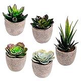 Assorted Decorative Faux Succulent Artificial Succulent Cactus Fake Cacti Plants with Gray Pots, Set of 5