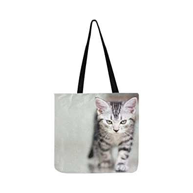 Amazon.com  Cute American Shorthair Cat Kitten With Copy Space ... 9f057e41180cf