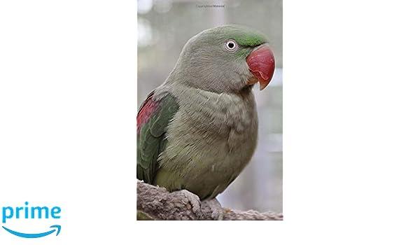 My Alexandrine Parakeet Notebook: Wild Pages Press