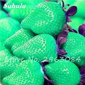 Semillas da Fruta 200 PC / bolso raras semillas de color fresa, semillas de frutas tropicales, semillas de Bonsai Pot de frutas para jardín Planta 13