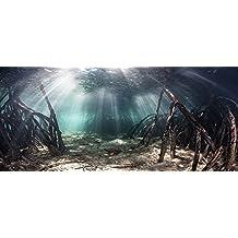 "Mangrove with Sunlight / Aquarium Background Fish Tank Background (18""x48"")"