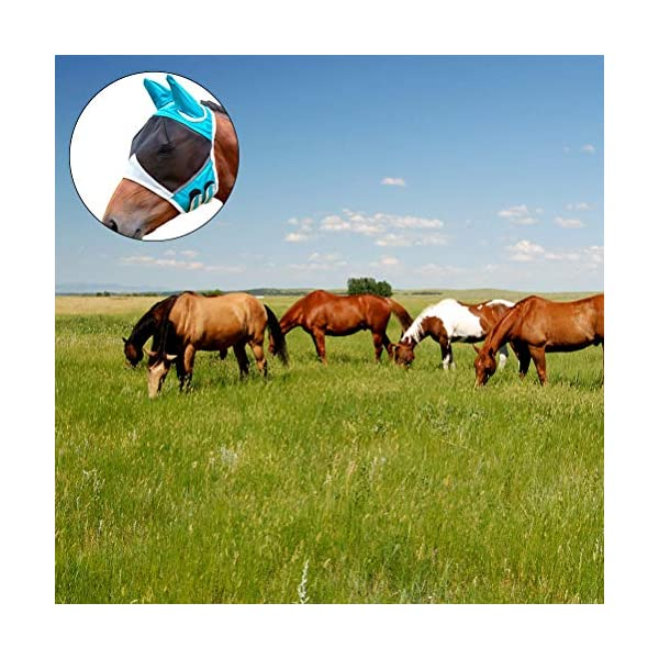 Jackallo Maschere per Cavalli Maschera Traspirante per Cavalli Maschera per Cavalli Antizanzara Maschera Traslucida con… 3 spesavip