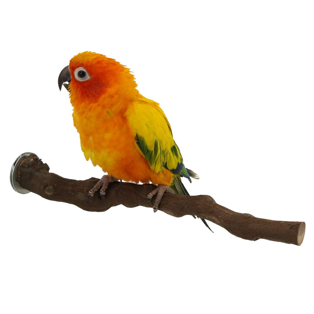 Wood Bird Stand Perch, Natural Wild Grape Stick Paw Grinding Standing Climbing Toy Cage Accessories for Small and Medium Parrots, Parakeets, Cockatiels, Lovebirds, Sun Conures, Caique, African Grey by YINGGE