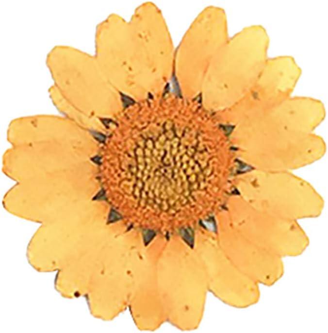 ypypiaol 12 Piezas Prensado Seco Flor Natural Resina Epoxi Uñas Artesanía DIY Teléfono Decoración naranjaNone