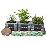 Cali Kiwi Pros Indoor Herb Growing Kit – DIY Home Cooking Kitchen Seeds – Grow Basil, Chives, Thyme, Oregano, Parsley, Cilant