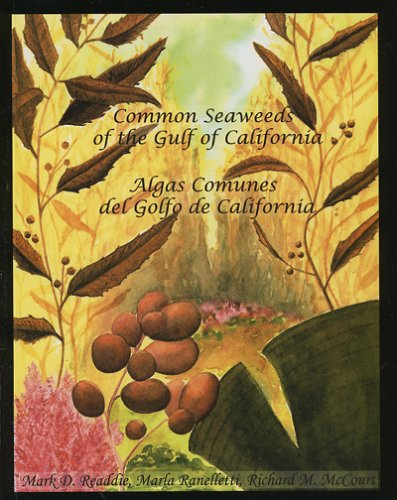 Descargar Libro Common Seaweeds Of The Gulf Of California Mark D. Readdie