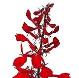 Cardinal Flower Lobelia Cardinalis Live Plant