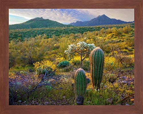 AJO Mountains-Organ Pipe Cactus National Monument-Sonoran Desert-Arizona by Tim Fitzharris - 13