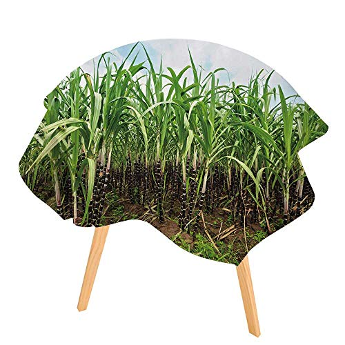 PINAFORE Indoor/Outdoor Tablecloth Sugar Cane Plantation Khanh HOA Province Vietnam Available in Many Different Sizes and Colorways 55