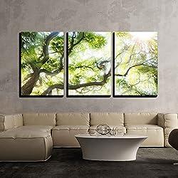"wall26 - Big Tree with Sun Light - Canvas Art Wall Decor - 16""x24""x3 Panels"