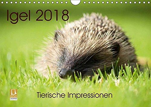 Igel 2018. Tierische Impressionen (Wandkalender 2018 DIN A4 quer): 12 bezaubernde Bilder von wilden Igeln (Monatskalender, 14 Seiten ) (CALVENDO ... [May 08, 2017] Lehmann (Hrsg.), Steffani