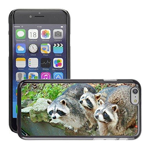 """Bild Hart Handy Schwarz Schutz Case Cover Schale Etui // M00133330 Raccoons Säugetiere Trinken Raccoons // Apple iPhone 6 PLUS 5.5"""""""