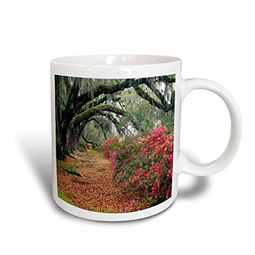 (3dRose Moss Covered Trees in Charleston Garden South Carolina Ceramic Mug, 11-Ounce)