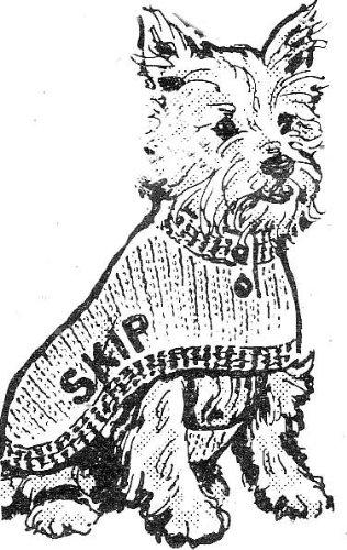 Crocheted Dog Coat Sweater Crochet Pattern Sizes 10 12 14 16 18