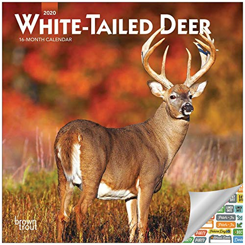 White Tailed Deer Mini Calendar 2020 Set - Deluxe 2020 White-Tailed Deer Wall Calendar with Over 100 Calendar Stickers (White Tailed Deer and Bucks Gifts, Office Supplies) (Calendar Mule)